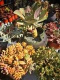 内容丰富的植物组合 免版税库存图片