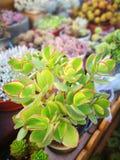 内容丰富的植物组合 免版税库存照片