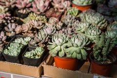 内容丰富的植物 免版税库存照片