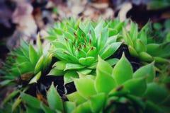 内容丰富的植物 库存图片