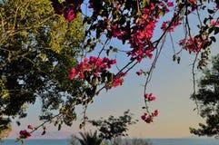 内盖夫加利利的湖的好的看法 库存照片