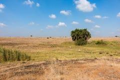 内罗毕国家公园与动物跑的徒步旅行队风景 图库摄影