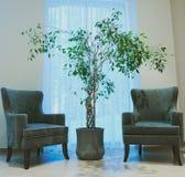 内部大厅树和两把绿色椅子在窗口附近 免版税库存图片