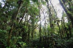 内部潮湿cloudforest 免版税图库摄影