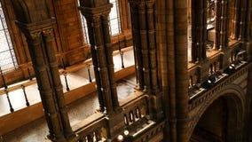 内部自然历史博物馆的建筑学和装饰,英国的成就卓越中心汇集在分类学方面和 库存照片
