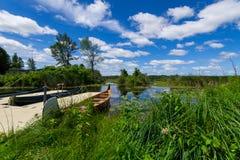内陆的安大略的加拿大Y形支架沼泽 库存照片