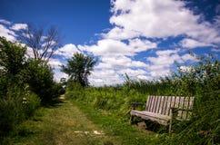 内陆的安大略的加拿大Y形支架沼泽 免版税库存照片