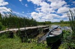 内陆的安大略的加拿大Y形支架沼泽 免版税库存图片