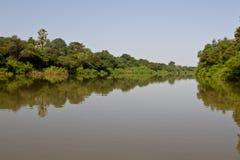 冈比亚河在Niokolo Koba 免版税库存照片