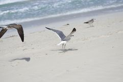 册页的鸟从沙滩离开 库存照片