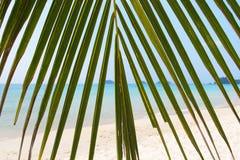 册页背景蓝皮书图象叶子掌上型计算机纸张照片纹理结构树 免版税库存图片