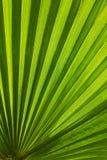册页背景蓝皮书图象叶子掌上型计算机纸张照片纹理结构树 免版税图库摄影