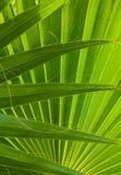 册页背景蓝皮书图象叶子掌上型计算机纸张照片纹理结构树 库存照片