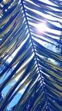 册页背景蓝皮书图象叶子掌上型计算机纸张照片纹理结构树 库存图片