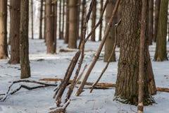 再倾斜树的拐杖在杉木森林里在冬天 库存图片