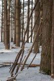 再倾斜树的拐杖在杉木森林里在冬天 免版税库存照片