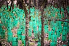 再生灌木 免版税库存照片
