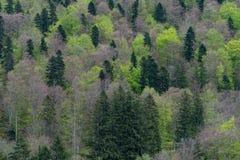 再生自然 免版税库存照片