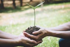 再造林的世界环境日,年轻人帮助的手种植生长入土壤的幼木和树,当工作时 图库摄影