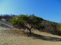 再wilding沙漠 库存照片