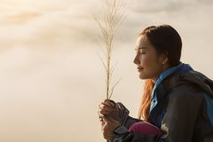 冒险旅行与有雾的早晨 免版税库存图片
