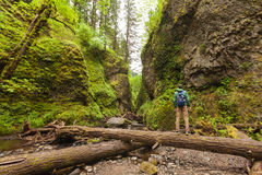 冒险步行与背包的人,走在Oneonta峡谷,室外生活方式 免版税库存照片
