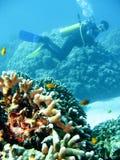 冒险热带潜水的水肺 库存照片