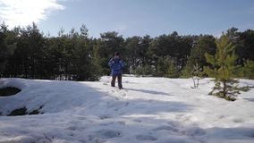 冒险衣服暖和和背包的人徒步旅行者走在杉木森林A人的积雪的路的通过走 股票录像