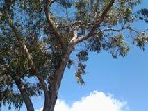 写的树蓝天背景自由空间在图片消息 免版税库存图片