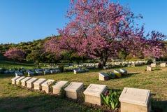 军事公墓在土耳其 库存照片