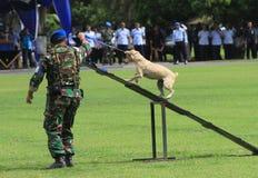 军事狗训练 库存照片