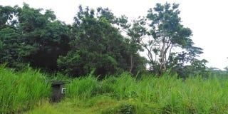 军事训练地面 Tengah森林 库存照片