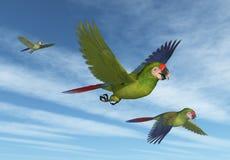军事飞行金刚鹦鹉 库存图片