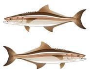军曹鱼猎鱼传染媒介例证 库存图片