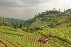 农业乡下在中爪哇省 图库摄影