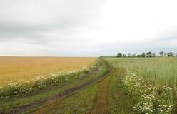 农业乡下风景,一条路在黑麦领域和一个狂放的草甸之间 库存照片