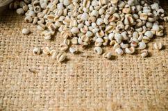 农业产品, job& x27; s泪花 库存图片