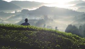 农业农业学家收获茶山概念 库存照片