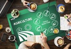 农业农厂种植业种植概念 库存图片