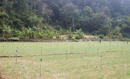 农业农场 库存照片