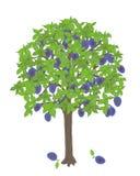 农业分支概念果子李子鲜美结构树 向量例证