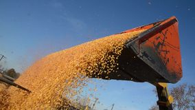 农业劳动从玉米收获 影视素材