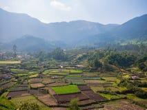 农业区域在Munnar,喀拉拉,印度 免版税图库摄影