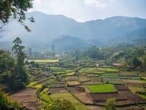 农业区域在Munnar,喀拉拉,印度 库存照片