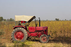农业印地安人 免版税库存图片