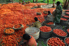 农业印地安人 库存照片