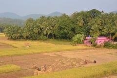 农业印地安人 库存图片