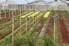 农业古巴 免版税库存图片