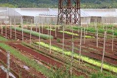农业古巴 免版税库存照片