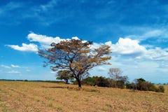 农业和农村场面鸟瞰图  免版税图库摄影
